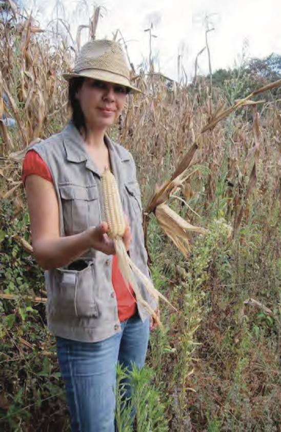 Maize harvest demonstration in a farm in San Raymundo, Guatemala (January 2019)